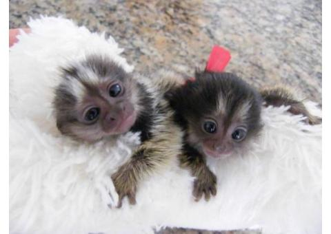 Diaper Trained Baby Primates